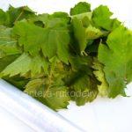 Как правильно заморозить виноградные листья для долмы на зиму - пошаговая инструкция с фото и советами